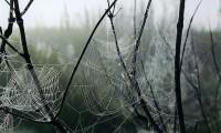 Spider Web In Fog - Paula Dittrick