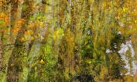 Autumn Symphony - Carol Andrews Jensen
