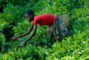 Labor Trafficking and Our Food Supply