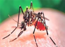 Zika: The Basics of the Virus and How To Protect Against It