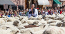 Sheep Blessing Brings Unique Role for Idaho Priest